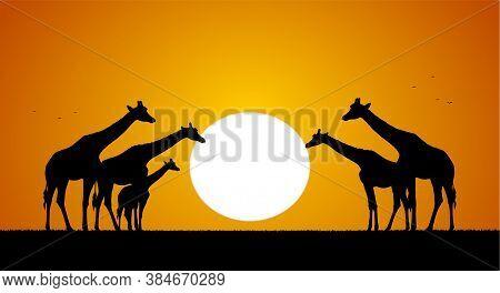 Vector Illustration: Herd Of Giraffes Against The Setting Sun. Silhouette
