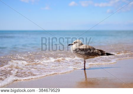 The Seagull Stands By The Sea And Sleeps. The Wave Wet The Seagull's Paws.