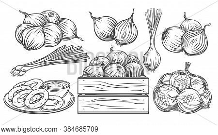 Onion Outline Drawn Monochrome Icon Set. Pile Of Onion Bulbs, Packed In Net Bag, In Wooden Crate, Bu