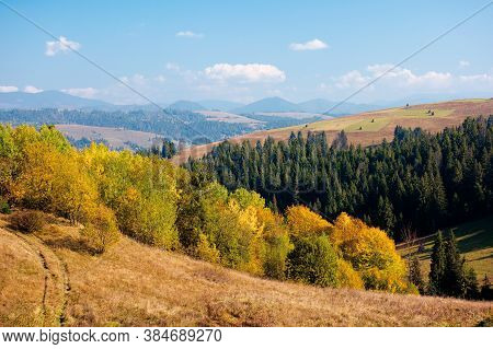 Rural Landscape Of Carpathian Mountains In Autumn. Trees In Yellow Foliage. Beautiful Sunny Weather