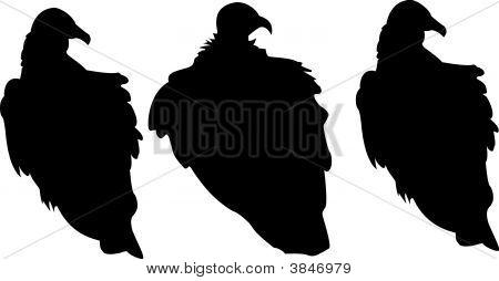 Three Vultures