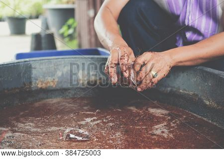 Hand Putting Coconut Coir In Plastic Bag For Grafting Plant Tree