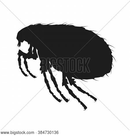 Louse Icon. Insect Icon Isolated. Black Silhouette Of Louse. Vector Illustration. Louse Icon In Flat