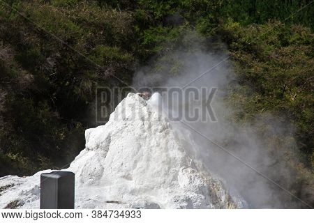 Lady Knox Geyser In Wai-o-tapu Thermal Park, New Zealand