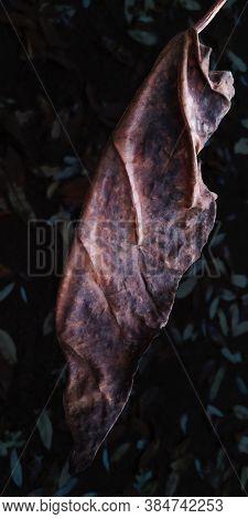 Vertical Close-up Of Dark Brown Shrunken Dried Catalpa Leaf, Resembling Cloak, On Blurred Background