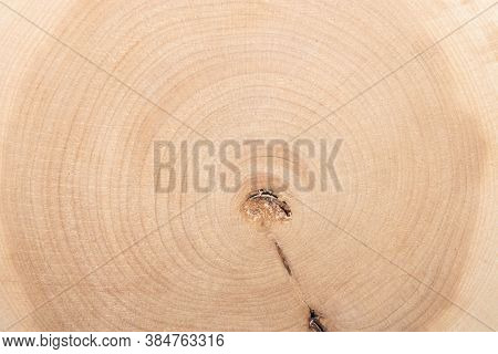 The Texture Of Juniper Wood In The Section.juniper Tree Background.