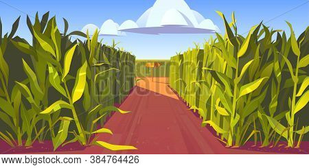 Road On Cornfield With Fork And Wooden Direction Sign. Concept Of Choosing Way And Making Decision.