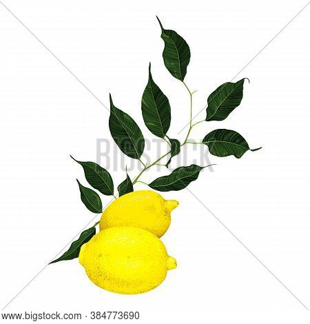 Yellow Lemon Citrus Fruit Branch With Green Leaves Isolated On White Background Vector Art