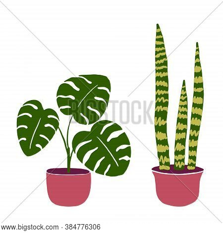 Set Of Two Hand-drawn House Plants In The Pots. Monstera And Sanseveria Isolated On White. Big Beaut