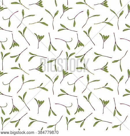 Seamless Pattern. Hand Drawn Rainbow Chard Micro Greens. Chard. Vector Illustration In Sketch Style