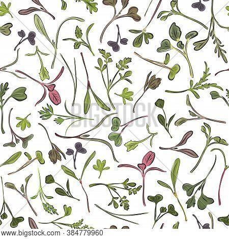 Seamless Pattern. Hand Drawn Rainbow Chard Micro Greens. Chard, Radish, Beet, Carrot, Cabbage. Vecto