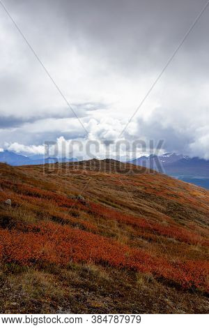 Colorful Meadow Fields On Top Of Nares Mountain During Fall Season. Located In Carcross, Near Whiteh