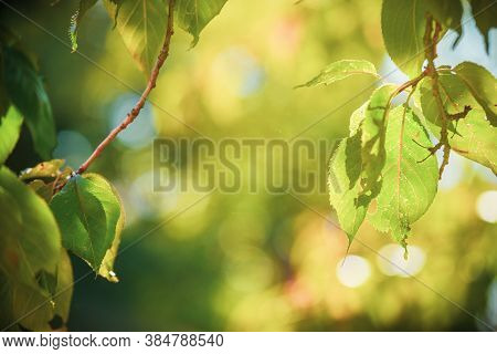 Natural Outdoor Background Of Leaves And Blurred Light With No People