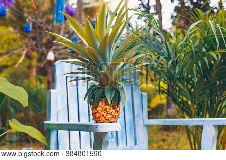 Fresh Pineapple On Blue Wooden Chair In The Garden