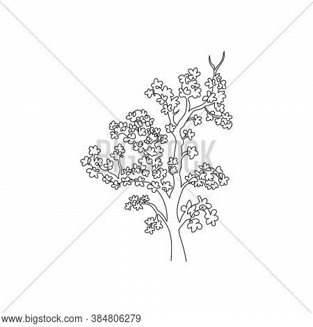 Single Continuous Line Drawing Beauty Japan Sakura Tree. Decorative Cherry Blossom Plant For Home De