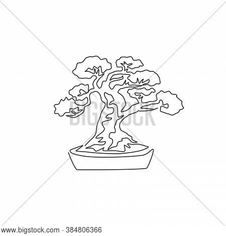 One Continuous Line Drawing Of Old Beauty And Exotic Miniature Bonsai Tree. Decorative Banyan Plant
