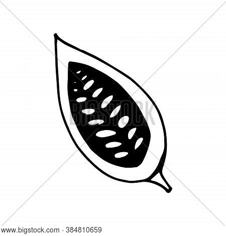 Cocoa Bean Half Hand Drawn Vector Doodle. Single Element For Design Icon, Label, Menu, Sticker. Food