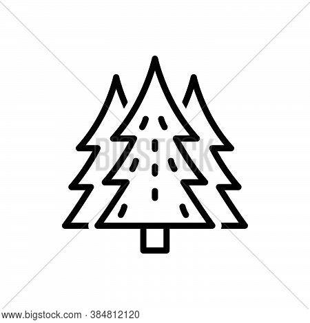 Black Line Icon For Pine Cedar Fir-tree Peak Forest Garden Spruce Environment Evergreen