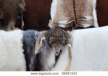 Wild Animal Fur Skins, Wolf Head Selling At Craft Market