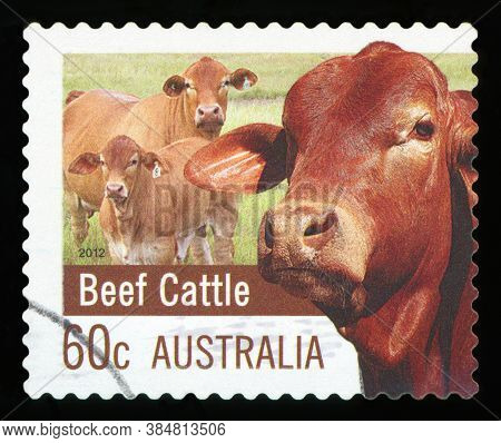 Australia - Circa 2012: A Stamp Printed In Australia Dedicated To Farming Australia Shows Beef Cattl