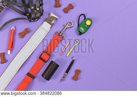 Flat Lay With Various Dog Supplies Including Leash, Collar, Nail Clipper, Poop Bags And Container, T