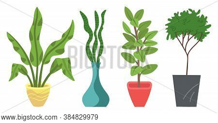 Set Of Pot With Houseplant Isolated At White. Vector Flowerpot Of Decorative Green Plant With Long L