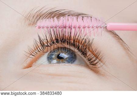 Eyelash Extension Procedure. Woman Master Combs Lashes Fake