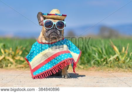 Funny French Bulldog Dog Dressed Up With Sunglasses, A Colorful Straw Hat And Poncho Gown In Front O