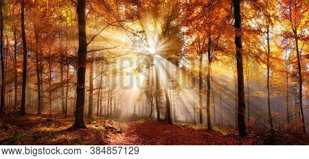 Enchanting Sun Rays In A Golden Forest In Autumn Illuminating A Path Covered In Red Foliage. The Bea