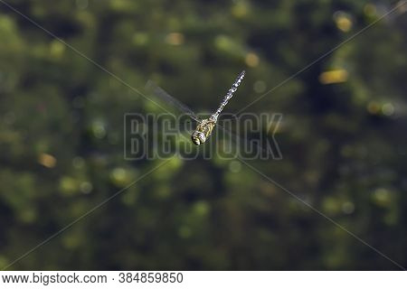 The Blue Dasher (pachydiplax Longipennis) Dragonfly Close Up