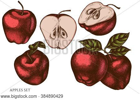 Vector Set Of Hand Drawn Colored Apples Stock Illustration