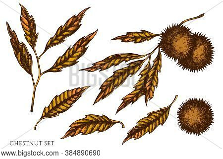Vector Set Of Hand Drawn Colored Chestnut Stock Illustration