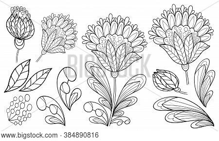 Set Of Floral Elements Plant Bud Coloring Isolate On White Background Illustration For Book Black An