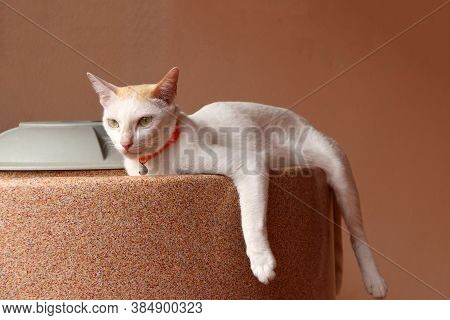 White Cat Laying Down On The Water Tank On Orange Color Background. It Is A Small Domesticated Carni