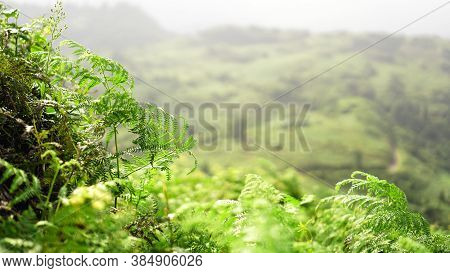 Glade Of Green Fern In Mountain Valley At Sunny Day