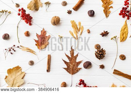 Autumn Leaves, Berries, Acorns, Walnuts, Cinnamon And Anise On White Background. Autumnal Pattern Wi