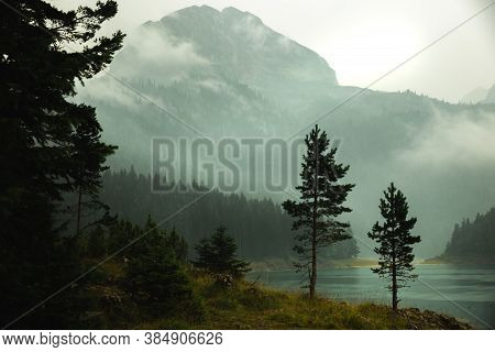 Atmospheric Photo Of Coniferous Trees Against The Background Of A Mountain In The Fog
