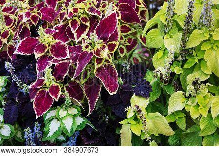 plants in autumn garden as background