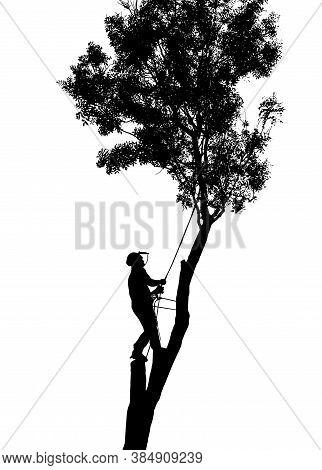 A Tree Surgeon Or Arborist Up A Tree
