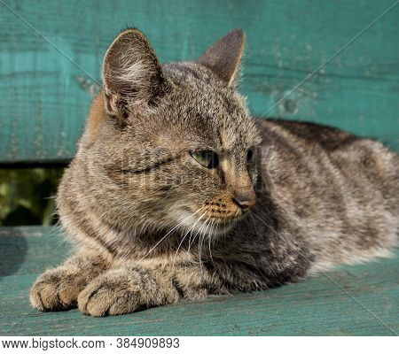Cat-mother Looks Rapacious Look Away From Herself. Portrait Of Cat. Can Be Used To Decorate The Pack