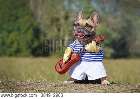 Cute Happy French Bulldog Dog Dressed Up As Musician Wearing A Funny Costume With Striped Shirt And