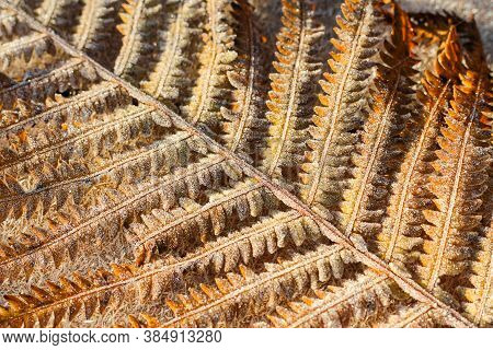 A Fern Leaf In The Forest Is Covered With Frost. The First Frost In The Fall. Autumn Background