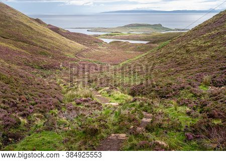 Hiking Trail Along Carpets Of Blooming Purple Heather Growing On Hills On The Isle Of Skye, Scotland