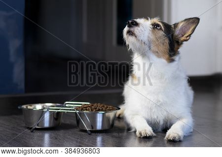 Portrait Of A Dog, The Dog Lies Near His Bowl Of Dry Food, Looks Up. Home Pet Eats At Home.