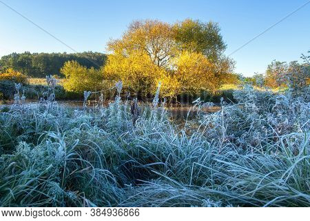 Fall Scenery. Frost Morning. Sunrise. First Hoarfrost. Grass In Hoarfrost Near Bank Of The River.