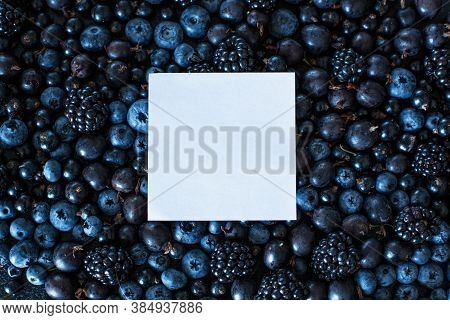 Mix Layout Set Of Different Types Of Black Berries With Place For Text. Stylish Seasonal Vitamins. C