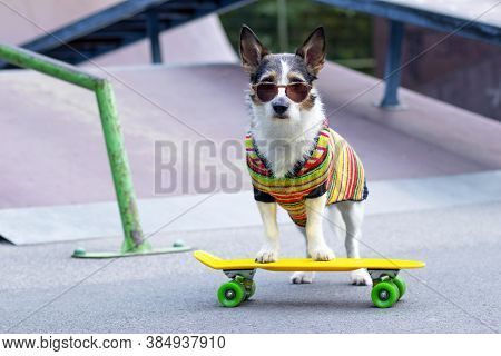 Stylish Dog On The Ramp, Riding A Penny Board Outside. A Pet Is Riding A Skateboard Or Longboard On