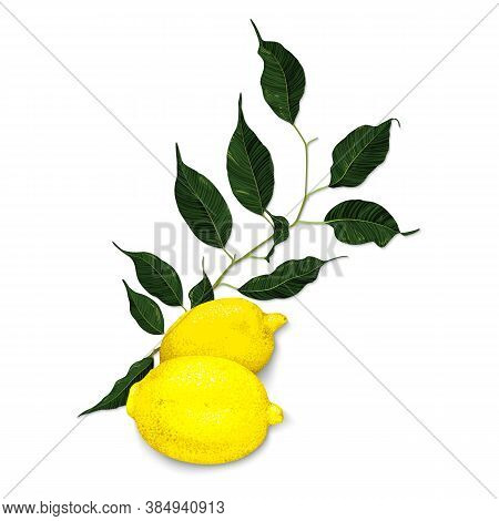 Yellow Lemon Citrus Fruit Branch With Green Leaves Isolated On White Background Art