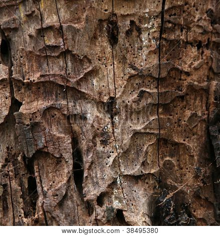 Decaying tree trunk texture