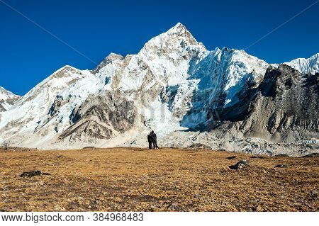 Young Couple Watching At Mount Mt. Everest And Nuptse Peak At Kala Pattar. Trekking In Nepal Himalay